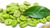 Green coffee bean extract ( Cholrogenic acid ) 45%